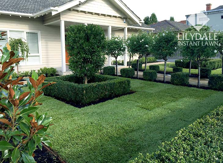 instant lawn front yard