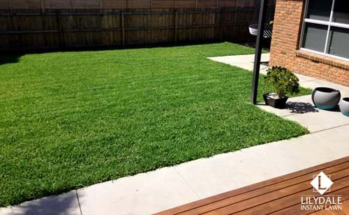 Wantirna Instant Lawn