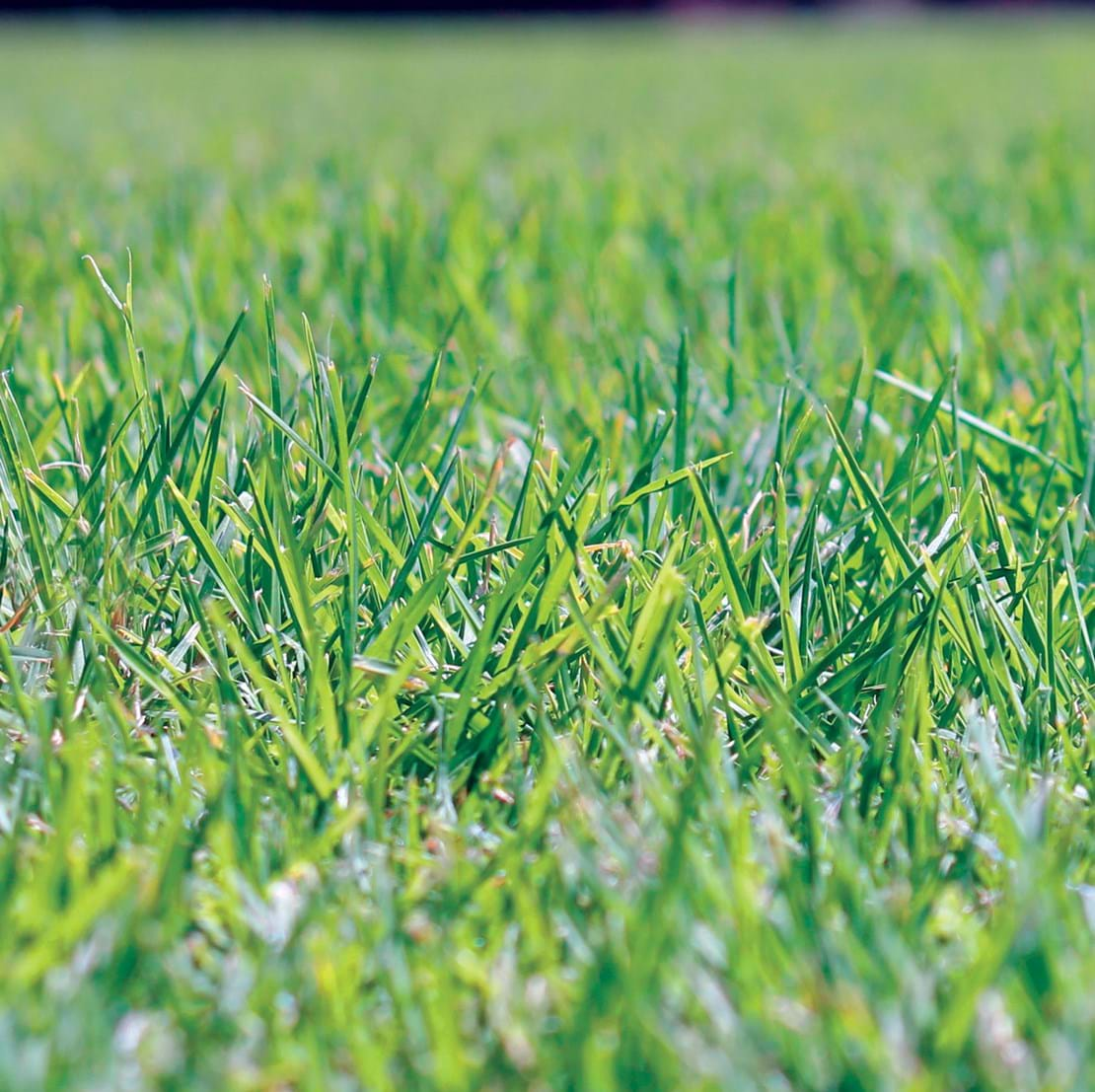 Eureka Kikuyu turf  | SELF REPAIR | TOUGH | DROUGHT TOLERANT | LAWN SOLUTIONS |SOFT LEAF | INSTANT LAWN
