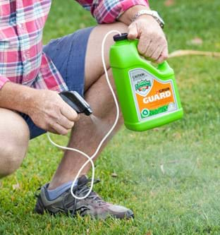 Lawn Grubs And Pests Lilydale Instant Lawn