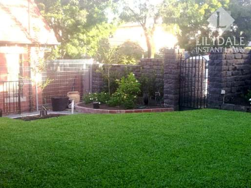south yarra instant lawn