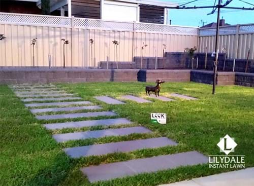 pascoe vale instant lawn
