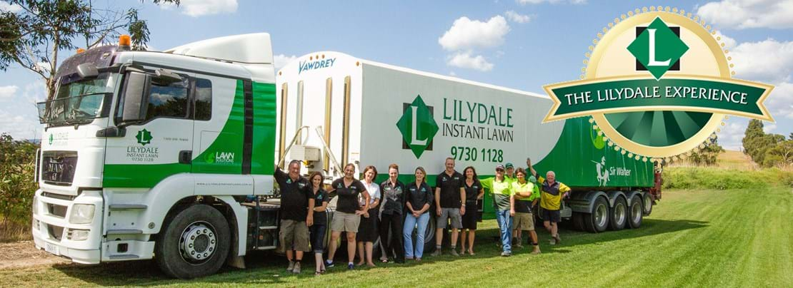 LILYDALE INSTANT LAWN