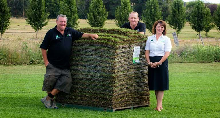 Lilydale Instant Lawn turf