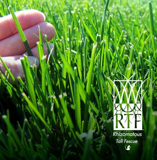 RTF turf Melbourne | Lawn Supplier | Instant Turf |Sir Walter Buffalo DNA Certified | Lawn Solutions Australia | Online Store | Local Pick up & Delivery | Lawn Care | Turf Farm | Melbourne | Victoria | Garden | Grass