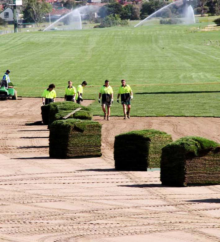 COMMERCIAL INSTANT LAWN