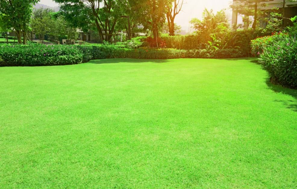 5 Things To Consider When Choosing The Right Type of Lawn Grass For Your Home