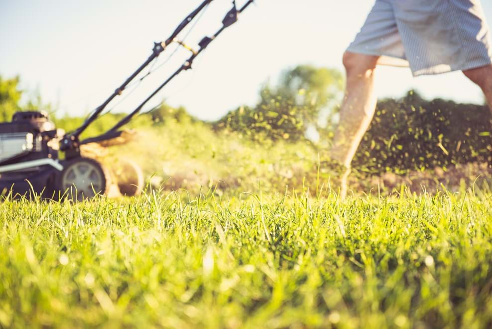 Taking Care Of Your Lawn This Summer