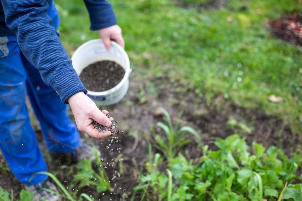 Why You Should Fertilise Your Lawn